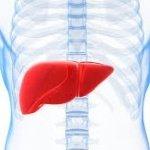 hepatolog.jpg